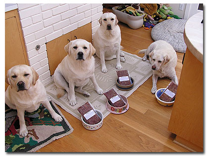 Natural Diet To Prevent Bladder Stones In Dogs